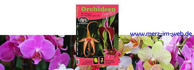 Orchideenzauber 2014 Heft 4, mit einem Bericht zur Zimmerkultur von aufgebundenen Orchideen.