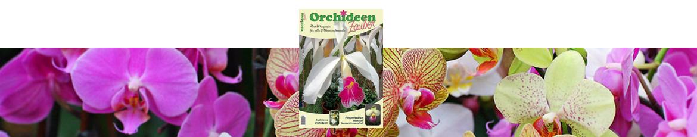 Orchideenzauber 2015 Heft 4, mit einem Artikel über Cattleya purpurata, einer prächtigen und blühfreudigen Orchidee.