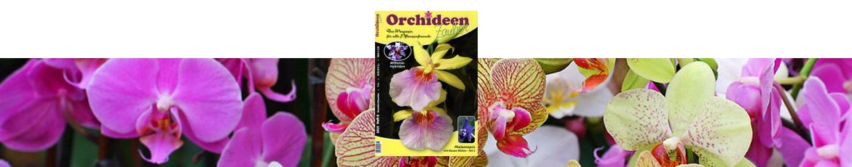 Orchideenzauber 2015 Heft 6, mit einem Artikel über Paphiopedilum rothschilianum.