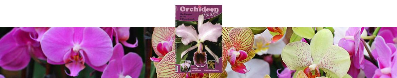 Orchideenzauber 2016 Heft 6, mit einem Artikel über Cattleya percivaliana.