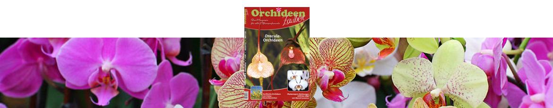 Orchideenzauber 2016 Heft 6, mit einem Artikel über die gattung Dracula.